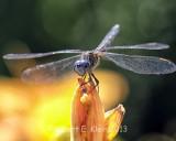 kleinr_Bugs_168.jpg