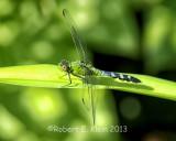 kleinr_Bugs_188.jpg