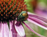 kleinr_Bugs_380.jpg