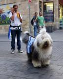 Celebrating Jerusalem Day Dog