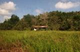 Scenery beside railway line