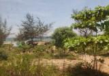 Sea and coastal vegetation near railway line