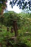 Cemetery behind Tamu Kianggeh