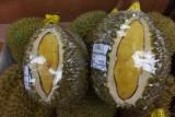 Durians, Yayasan
