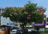 City street, Kota Kinabalu