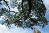 Lanterns on tree, Padang Merdeka