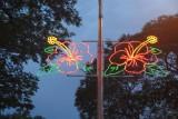 Hibiscus street lights