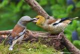 My Garden Birds  (favorite shots)