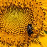 The Pollinator