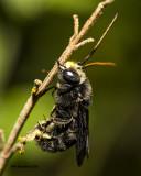 5F1A2137 Black speedy bee.jpg