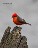 2016_birds