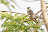 (Documentary Photo)