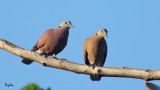 Link to Full HD Footage