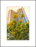 40-storey residential buildings and flower-loaded tree