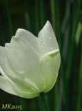 lotus_shooting