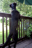 The Taunting Squirrel