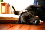 Chelsie Dog