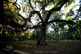 Large Tree-Manatee Springs