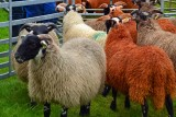 Bute  Agricultural Show 2014