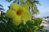 El Cid Marina Beach Flower