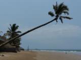 Playa Sabalo Palm
