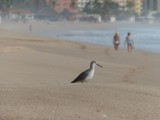 Playa Escondida Sandpiper