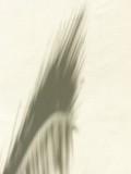 Mayan Palace Palm Shadow