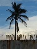 Rust, Rebar, Concrete and Palm Tree