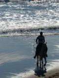 Playa Sabalo Horseback Riding