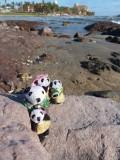 The Pandafords Visit Playa Sábalo