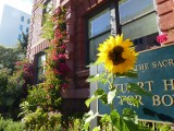 Pacific Heights School Sunflower