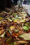 Autumn on Fillmore Street