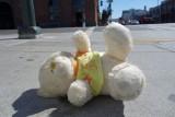 Street Teddy
