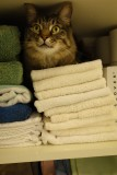 Linen Closet Rocky