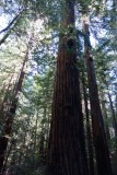 Armstrong Redwood State Reserve, Guerneville