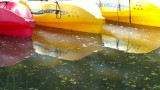 Kayak Wailua Adventure Kayaks