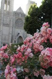 Huntington Park Flowers