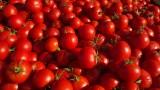 Civic Center Farmers Market Tomatoes