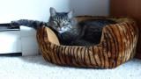 Rocky in Nest 2
