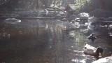 Lithia Park Lower Duck Pond