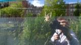 Amsterdam Spider