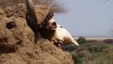 Lake Manyara National Park Skull