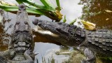 Grand Mayan Crocodile Pond