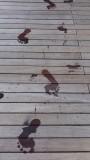 Mayan Palace Pool Bridge Footprints