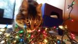 Rocky with Christmas Lights