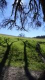 Sunol Regional Wilderness Oaks
