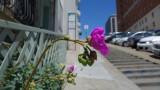 Nob Hill Inn Flower