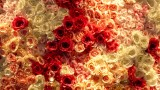 EB Florals