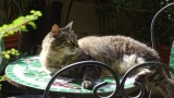 Rocky on the garden table