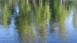 Rouge River Reflections